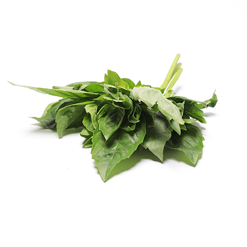 Basil with Cut Tops