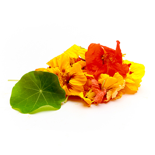 Local Nasturtium Blossoms